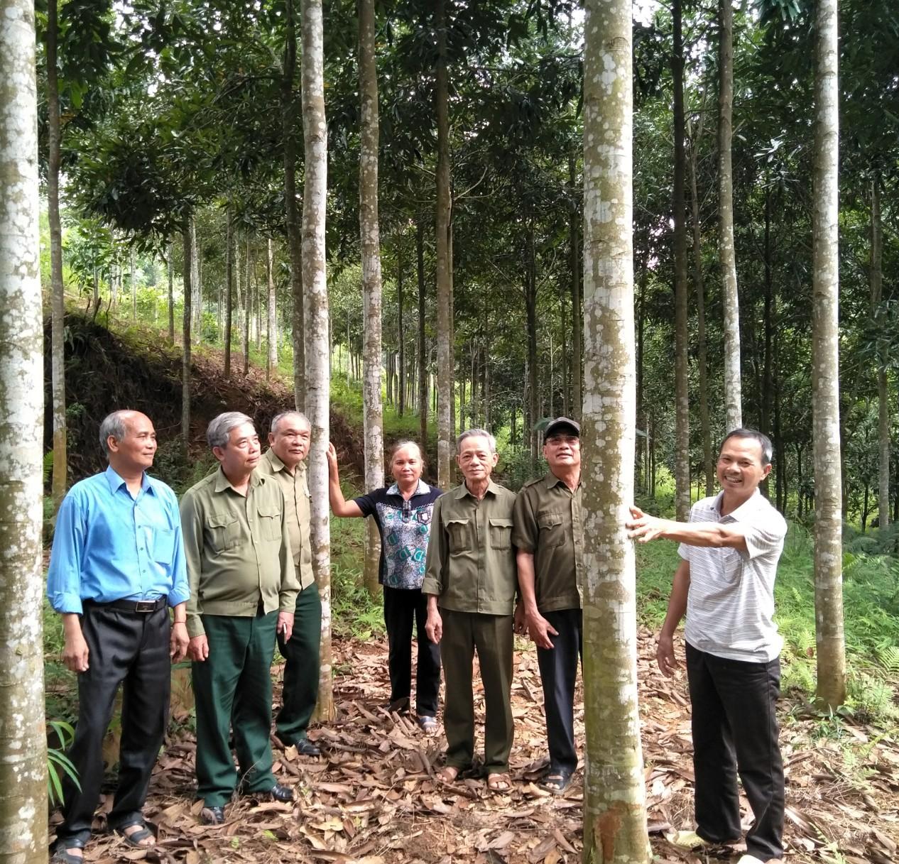 Hương rừng Việt tiến - Nguyễn Quang Chính
